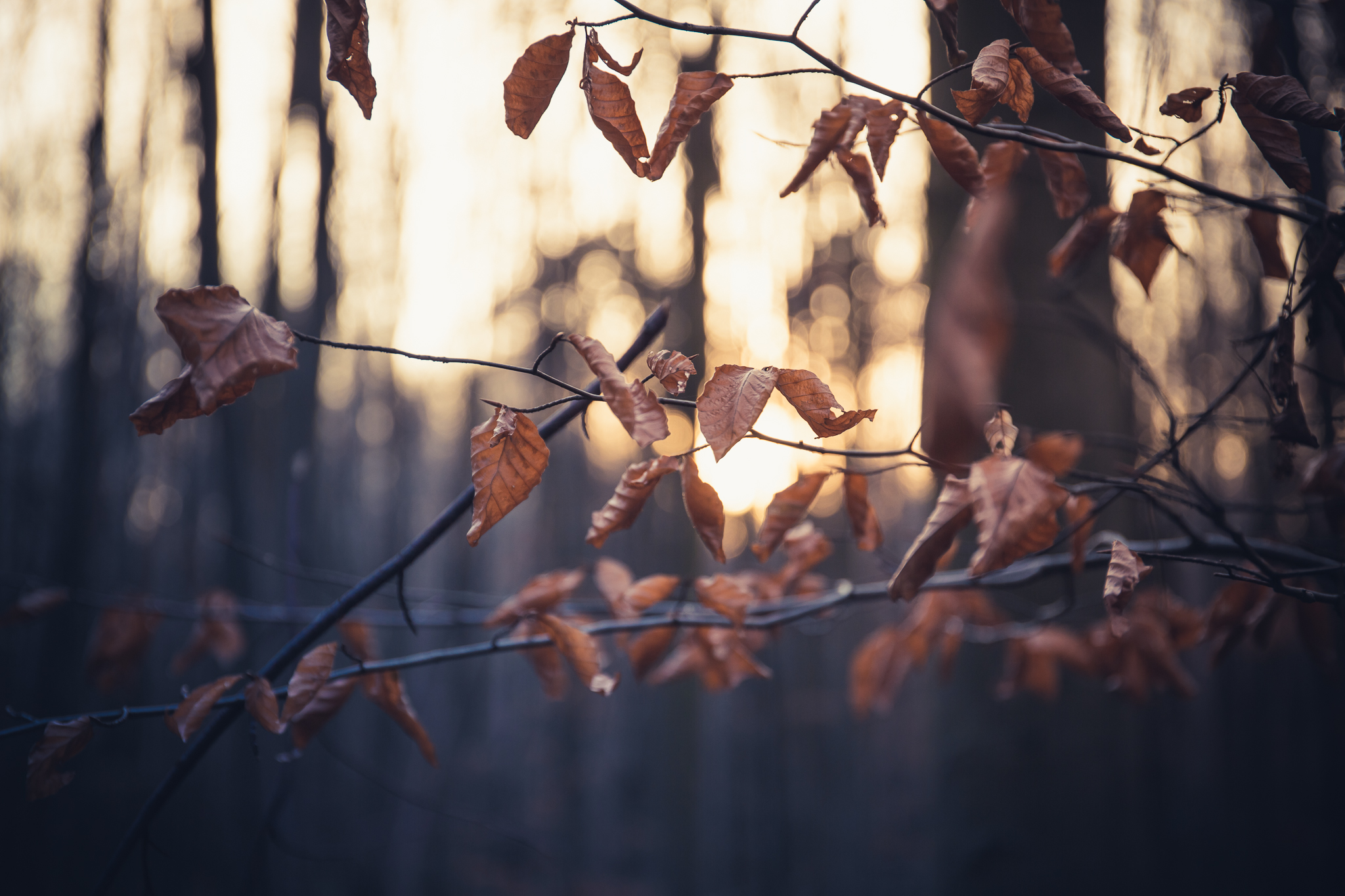 Sonnenuntergang hinter Herbstlaub